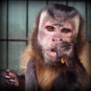 jungle friends primate sanctuary kooda