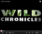 National Geographic Wild Chronicles Video