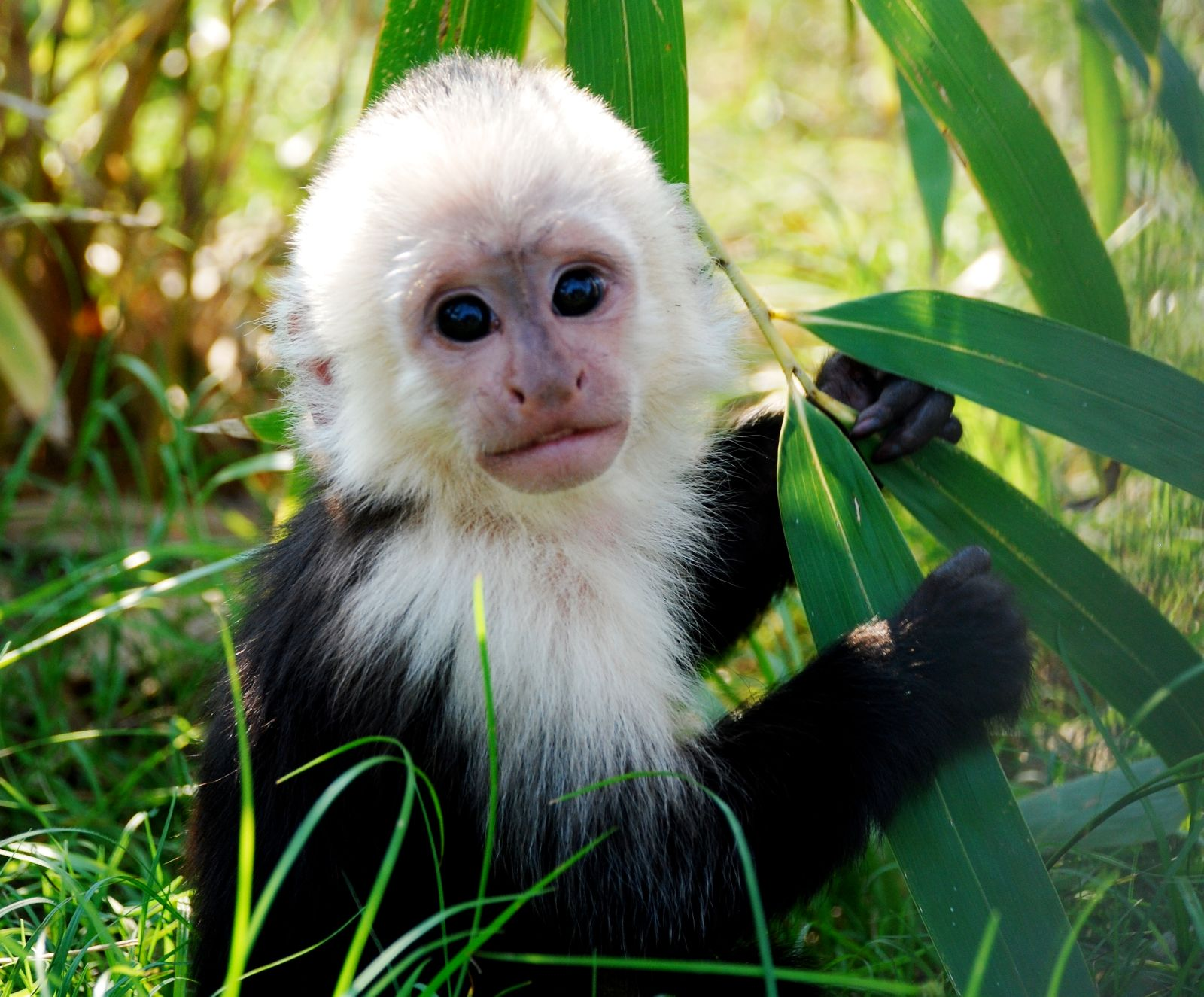 Jungle Friends Primate Sanctuary: JN-2011-12-27 Monkey ...
