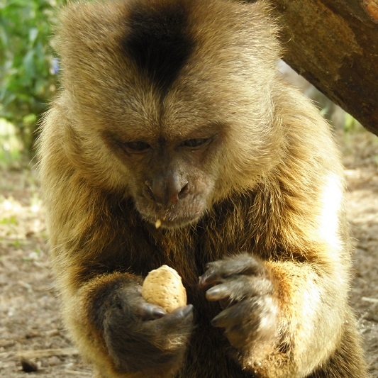 Jungle Friends Primate Sanctuary Gifts For The Monkeys