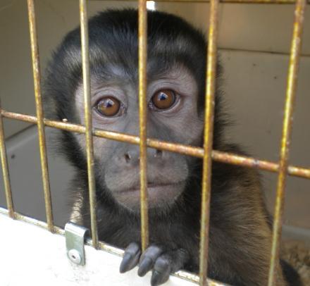Jungle Friends Primate Sanctuary Baby Monkey Rescue
